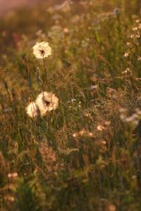 Fleurs 104DVD205_result
