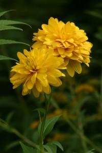 Fleurs 110DVD226_result