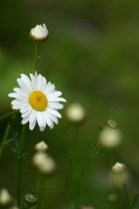 Fleurs 142DVD294_result