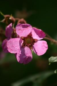 Fleurs 153DVD358_result