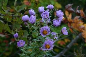 Fleurs 168DVD428_result