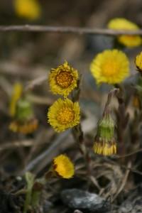 Fleurs 175DVD444_result
