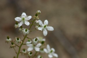 Fleurs 235EXTRA633_result