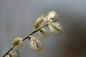 Fleurs 297EXTRA830_result