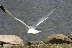 Oiseaux 024DVD165_result