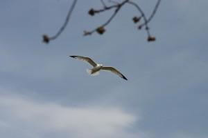 Oiseaux 026DVD168_result