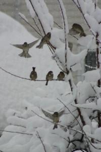 Oiseaux 044DVD274_result