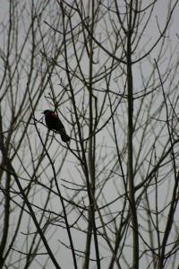 Oiseaux 058DVD401_result