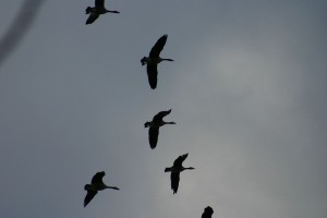 Oiseaux 088EXTRA489_result
