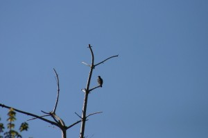 Oiseaux 100EXTRA525_result