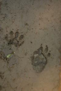 Petits mammifères 004DVD112_result